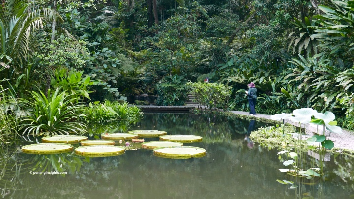Penang attractions on Penang Tropical Spice Garden