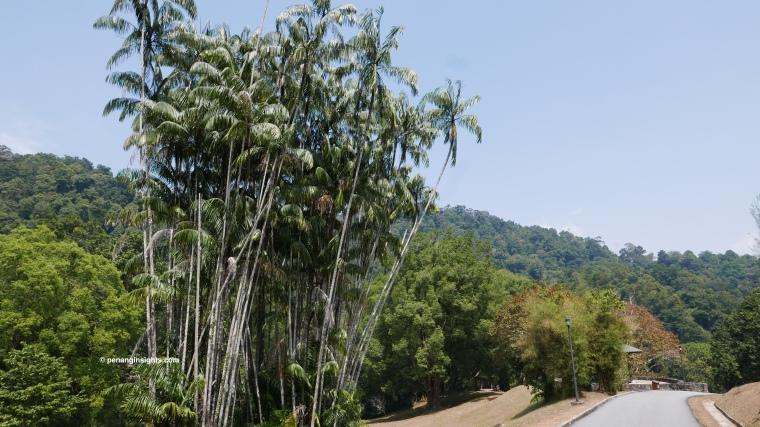 Penang attractions on Penang Botanic Gardens