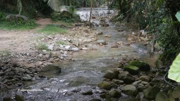 Botanical Gardens Penang
